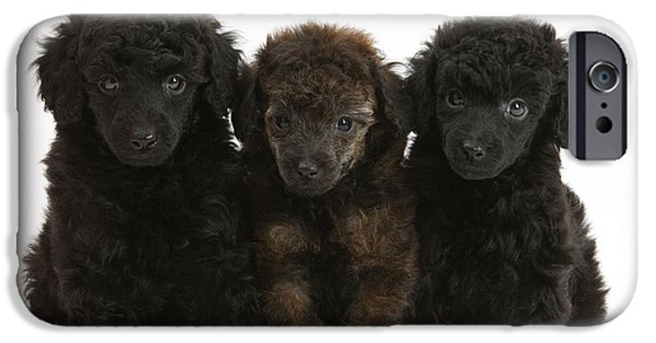 House Pet iPhone Cases - Toy Poodle Pups iPhone Case by Mark Taylor