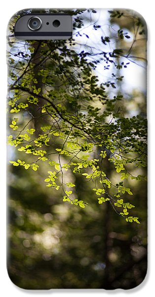 Forest Detail iPhone Cases - Tranquil Forest iPhone Case by Mike Reid
