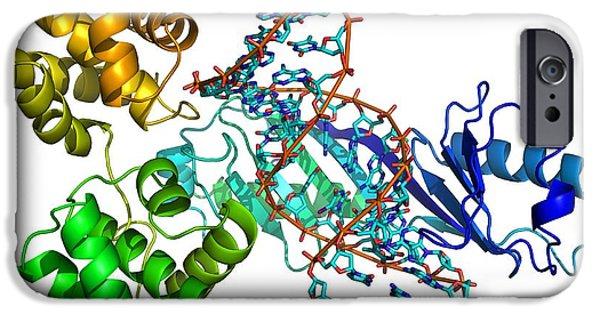 Coenzyme iPhone Cases - Transcription Preinitiation Complex iPhone Case by Laguna Design