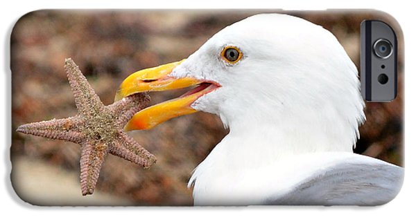 Seagull iPhone Cases - Treasure Island iPhone Case by Fraida Gutovich