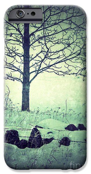 Rural Snow Scenes iPhone Cases - Tree and Fence in the Fog and Snow iPhone Case by Jill Battaglia