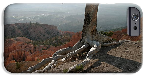 Tree Roots iPhone Cases - Tree and roots in Bryce Canyon iPhone Case by Randall Nyhof