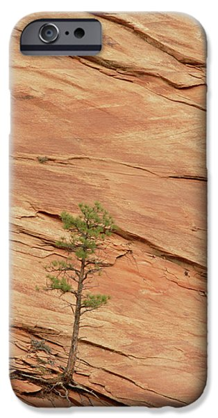 Slickrock iPhone Cases - Tree Clinging To Sandstone Formation iPhone Case by Gerry Ellis