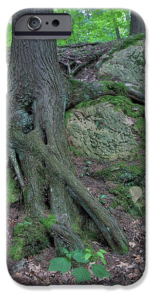 Tree Growing Over A Rock iPhone Case by Ted Kinsman