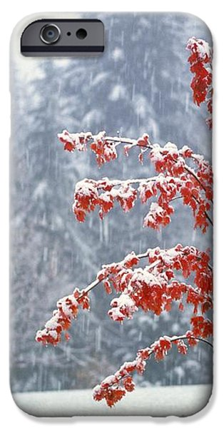 Tree In The Winter iPhone Case by Natural Selection Craig Tuttle