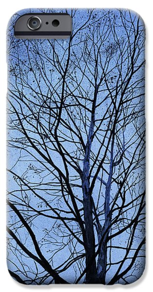Tree. Sycamore iPhone Cases - Tree in Winter iPhone Case by Andrew King