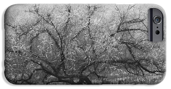 Snowy Stream iPhone Cases - Tree of Enchantment iPhone Case by Debra and Dave Vanderlaan
