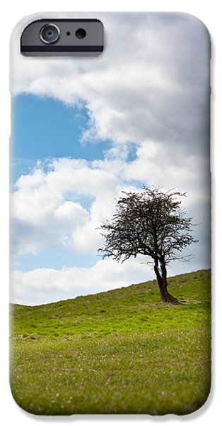 Tree iPhone Case by Semmick Photo