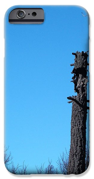 Field. Cloud iPhone Cases - Tree Trunk Burned iPhone Case by Naxart Studio