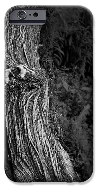 Tree Trunk iPhone Case by Nadya Ost