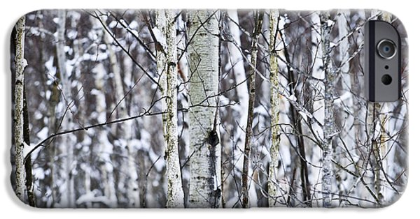 Close iPhone Cases - Tree trunks covered with snow in winter iPhone Case by Elena Elisseeva
