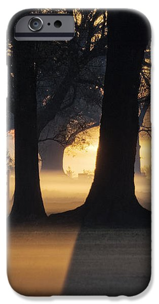 Trees in the Morning Mist iPhone Case by Jeremy Woodhouse