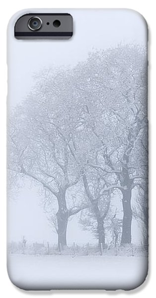Trees Seen Through Winter Whiteout iPhone Case by John Short