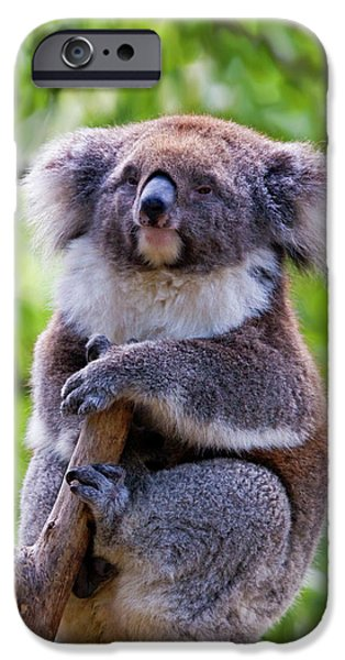 Treetop Koala iPhone Case by Mike  Dawson