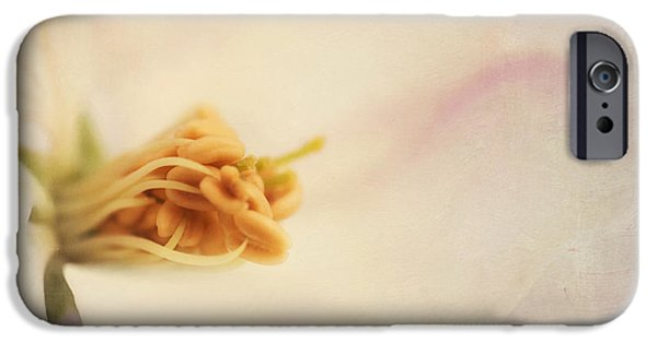 Close Up Floral iPhone Cases - Tresfonds Heart Of A White Blossom iPhone Case by Priska Wettstein