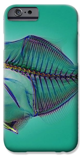 Triggerfish Skeleton, X-ray iPhone Case by D. Roberts