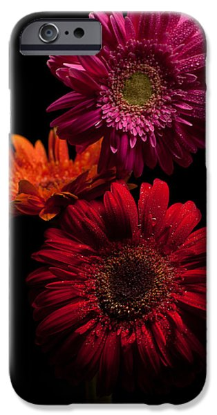 Trio iPhone Case by Ron Smith