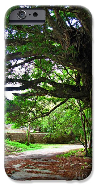 Best Sellers -  - Mangrove Forest iPhone Cases - Tropical Banyan Path iPhone Case by Joan  Minchak