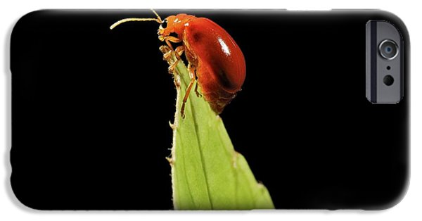 Eating Entomology iPhone Cases - Tropical Beetle iPhone Case by Robbie Shone