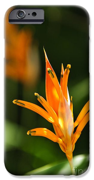 Parakeet iPhone Cases - Tropical orange heliconia flower iPhone Case by Elena Elisseeva