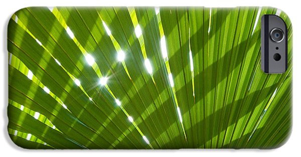Fauna iPhone Cases - Tropical Palm Leaf iPhone Case by Amanda And Christopher Elwell