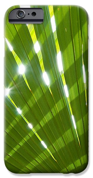 Tropical Palm Leaf iPhone Case by Amanda And Christopher Elwell