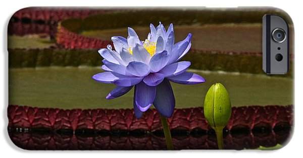 Victoria Cruziana iPhone Cases - Tropical Water Lilies iPhone Case by Byron Varvarigos