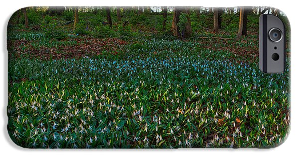 Morton iPhone Cases - Trout Lilies on Forest Floor iPhone Case by Steve Gadomski