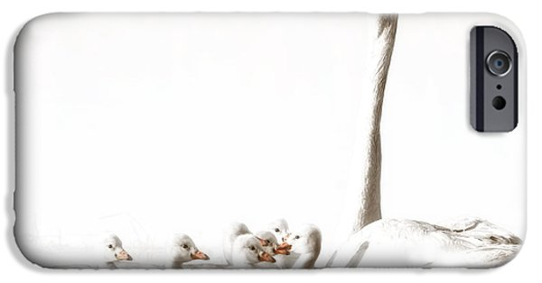 Baby Bird iPhone Cases - Trumpeter Swans iPhone Case by Al  Mueller