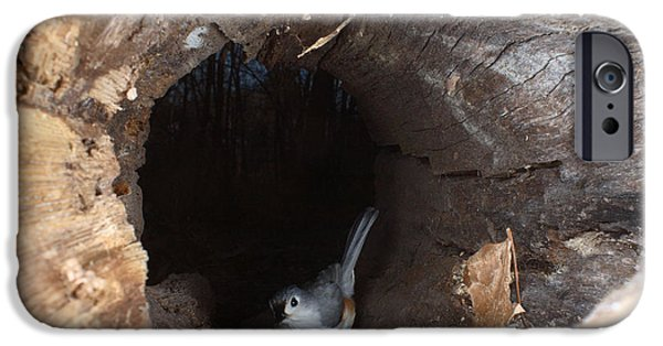 Titmouse iPhone Cases - Tufted Titmouse In A Log iPhone Case by Ted Kinsman
