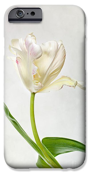Flora iPhone Cases - Tulip iPhone Case by Nailia Schwarz