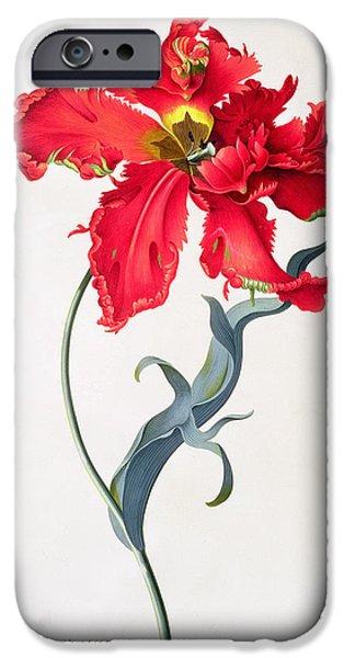 19th Century iPhone Cases - Tulip Perroquet Rouge iPhone Case by Georg Dionysius Ehret