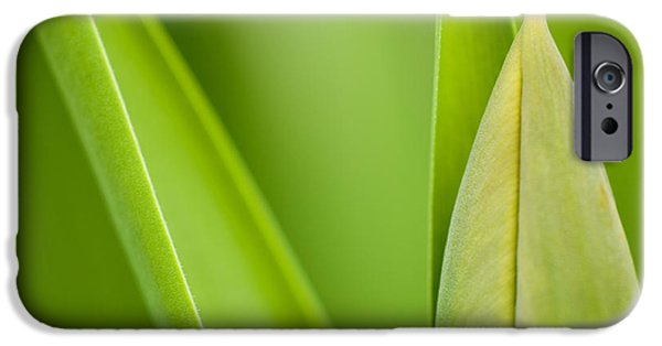 Bud iPhone Cases - Tulip iPhone Case by Silke Magino