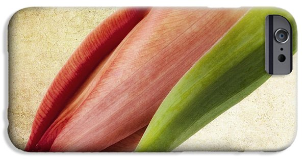 Flora Mixed Media iPhone Cases - Tulipano iPhone Case by Angela Doelling AD DESIGN Photo and PhotoArt