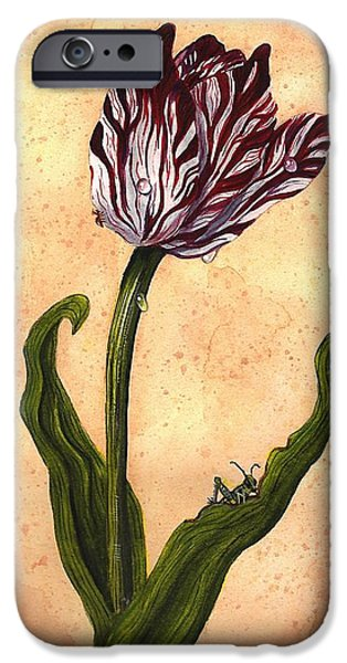 Florals iPhone Cases - Tulpenmanie iPhone Case by Terry  Stokely