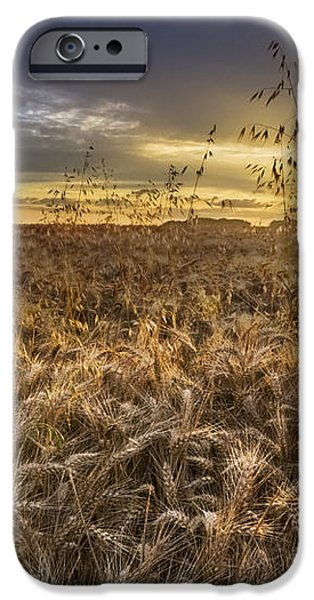 Tumble Wheat iPhone Case by Debra and Dave Vanderlaan