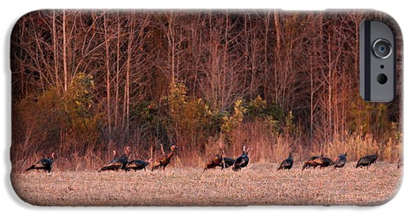Eastern Wild Turkey iPhone Cases - Turkey - Wild Turkey - Seventeen Longbeards iPhone Case by Travis Truelove