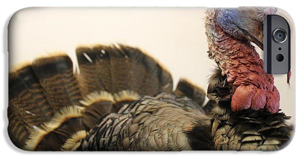 Best Sellers -  - Eastern Wild Turkey iPhone Cases - Turkey Taxidermy iPhone Case by Theresa Willingham