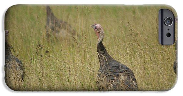 Wild Turkey iPhone Cases - Turkeys iPhone Case by Michael Peychich
