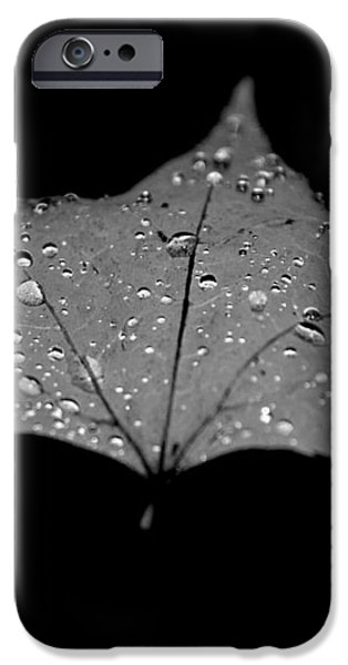Turn Over a New Leaf iPhone Case by Betsy A  Cutler