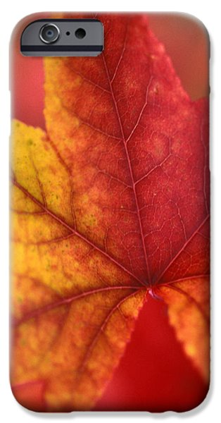 Turn Turn Turn iPhone Case by Kathy Yates