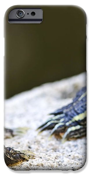 Turtle conversation iPhone Case by Elena Elisseeva