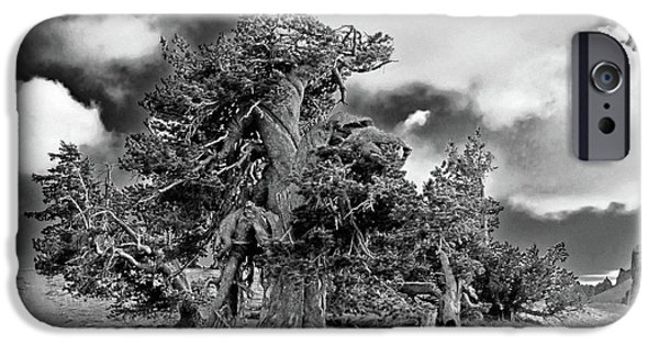 Survivor Art iPhone Cases - Twisted old Bristlecone Pine above Crater Lake - Oregon iPhone Case by Christine Till