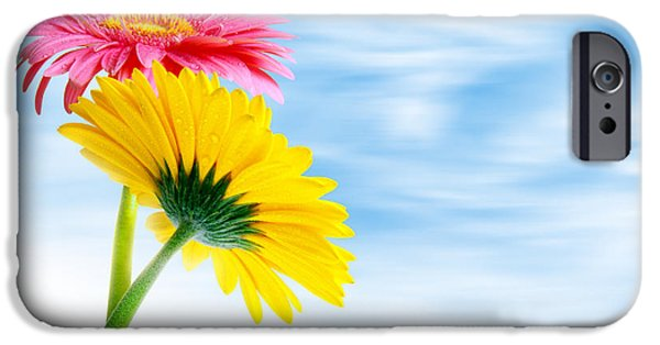 Close Up Floral iPhone Cases - Two Gerberas iPhone Case by Carlos Caetano