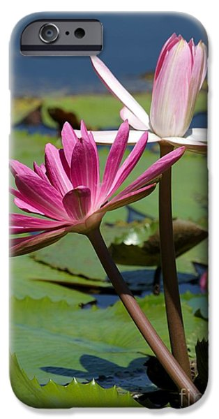 Snake iPhone Cases - Two Graceful Water Lilies iPhone Case by Sabrina L Ryan