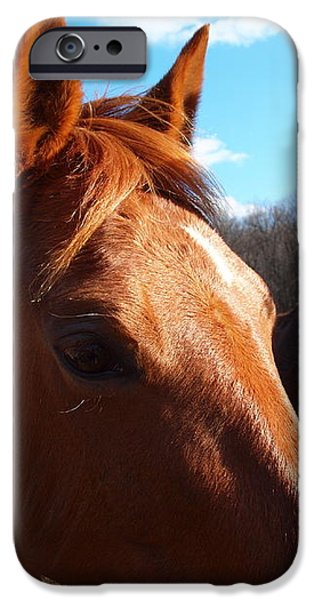 two horses in love iPhone Case by Robert Margetts