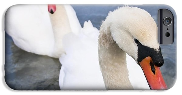 Swans... iPhone Cases - Two Swans iPhone Case by Svetlana Sewell