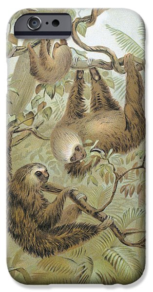 Sloth iPhone Cases - Two-toed Sloth iPhone Case by Granger