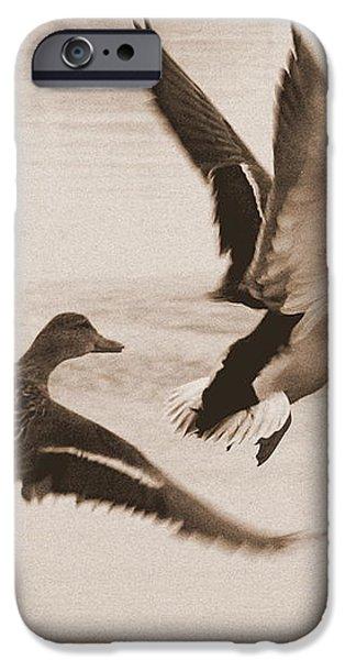 Two Winter Ducks in Flight iPhone Case by Carol Groenen