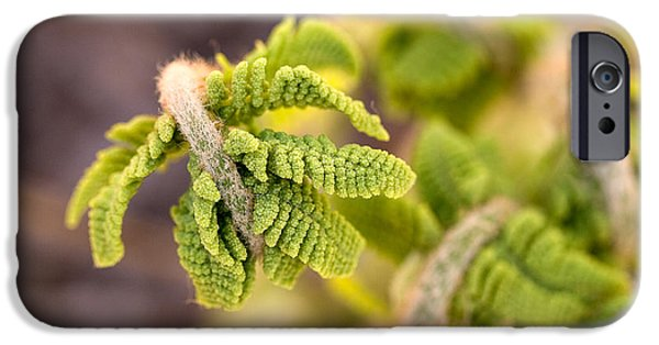 Nature Unfurls iPhone Cases - Unfolding fern leaf iPhone Case by Louise Heusinkveld